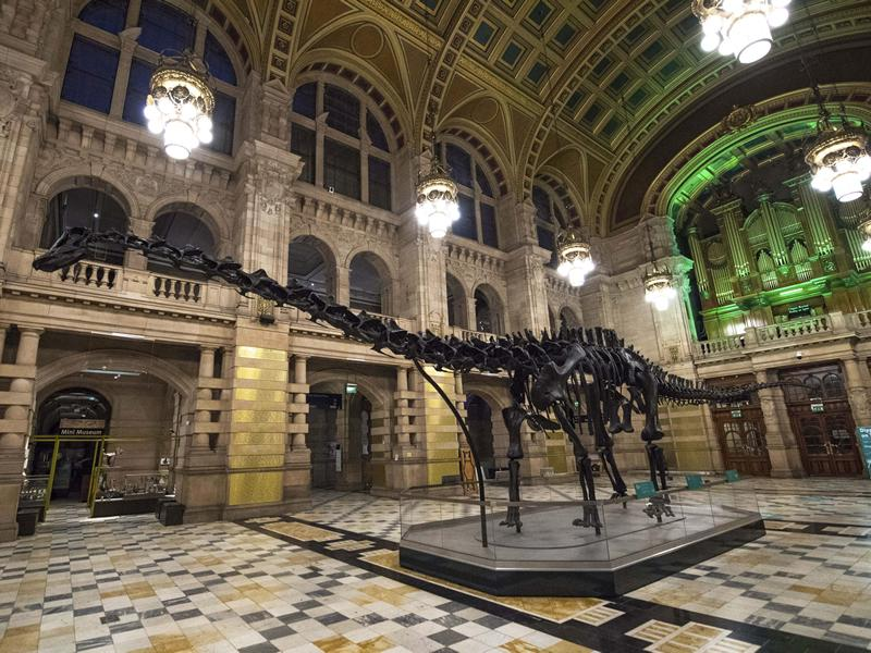 Dippy on Tour, A Natural History Adventure, is now open at Kelvingrove!