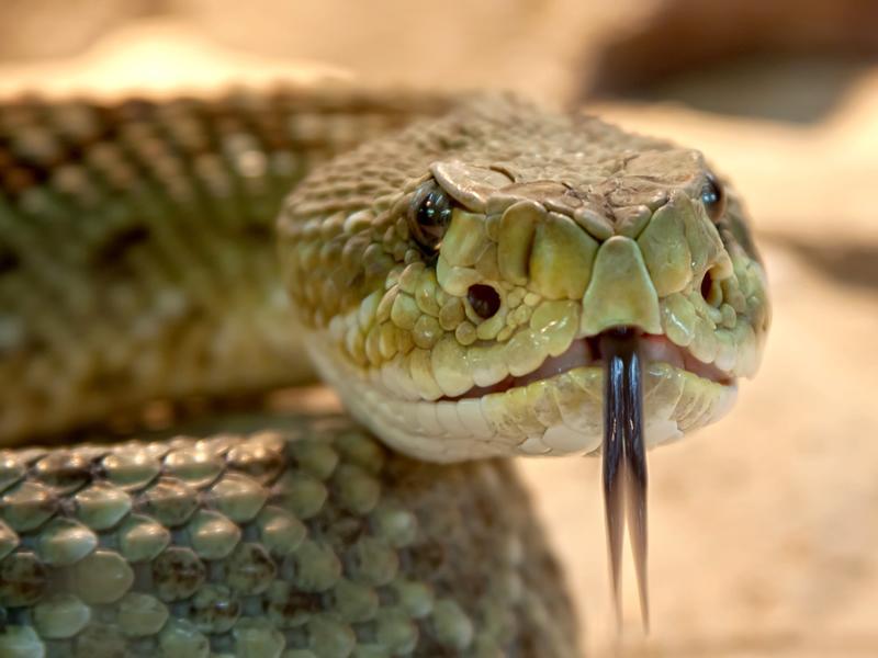Snake Weekend