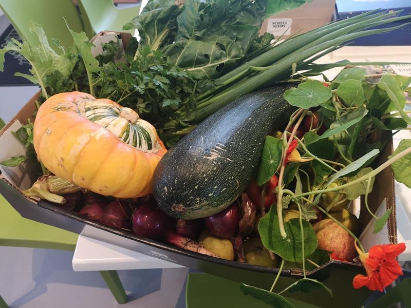 Virtual Workshop: Growing Your Own Fruit, Veg & Herbs