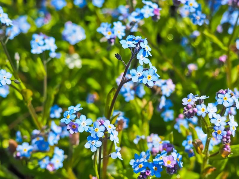 Flowering Greening Garnethill