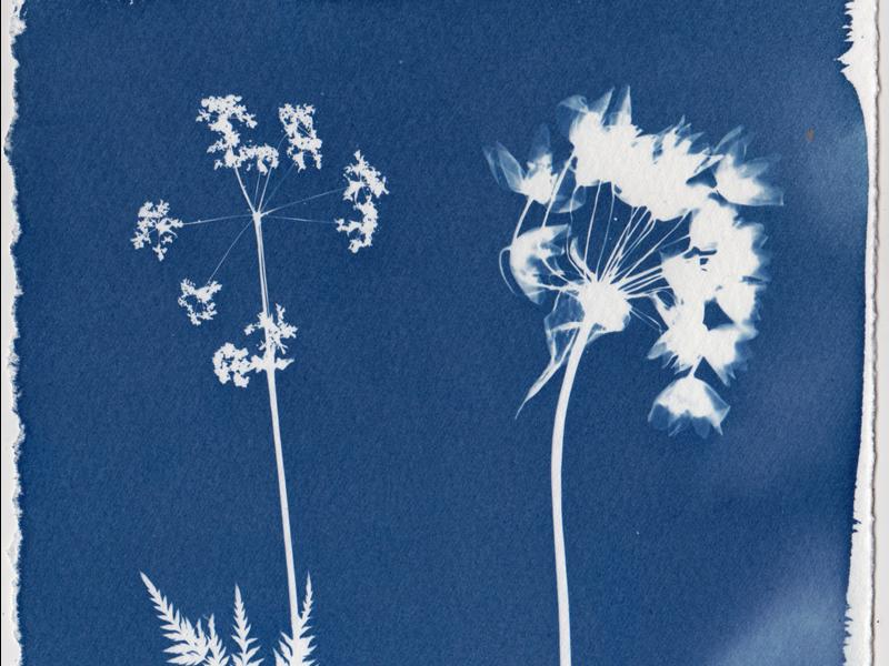 Botanical Cyanotypes