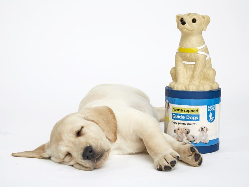 Guide Dogs Appeal 2019