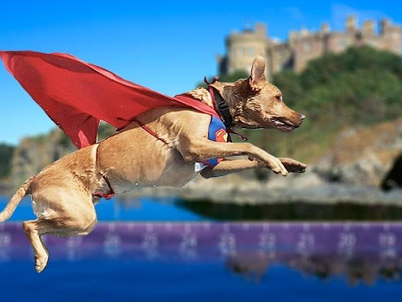 Culzean Dog Jamboree