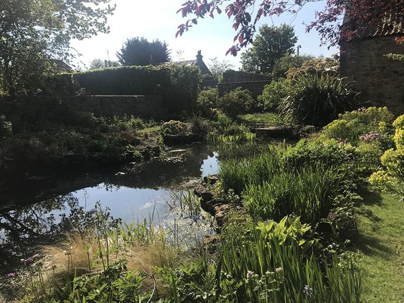 Scotland's Gardens Scheme Open Garden: 89 Ravenscroft Street