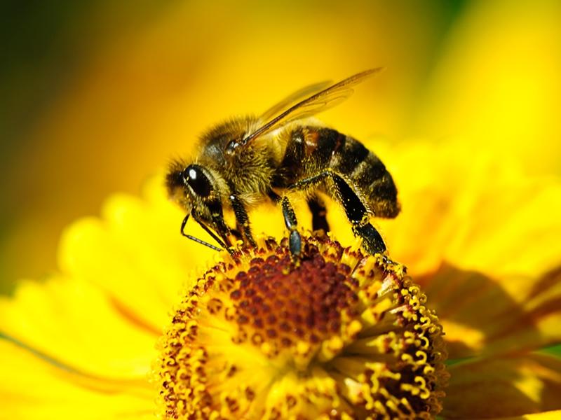 Pollinator Patrol