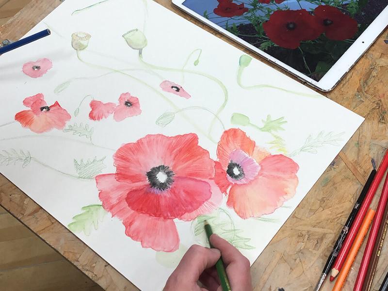 Watercolour Poppies - Blaeberry River Art