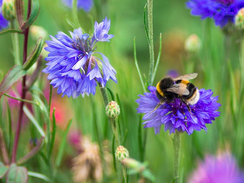 Dobbies celebrates World Bee Day this May with expert advice to make your garden a bee friendly haven
