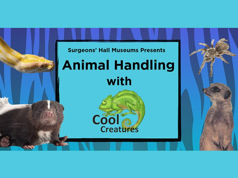 Animal Handling with Cool Creatures