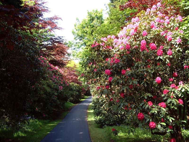 Scotland's Gardens Scheme Open Garden: Carruth