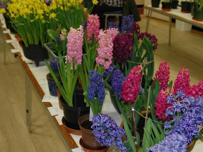 Mearns Horticultural Society Annual Spring Flower Show