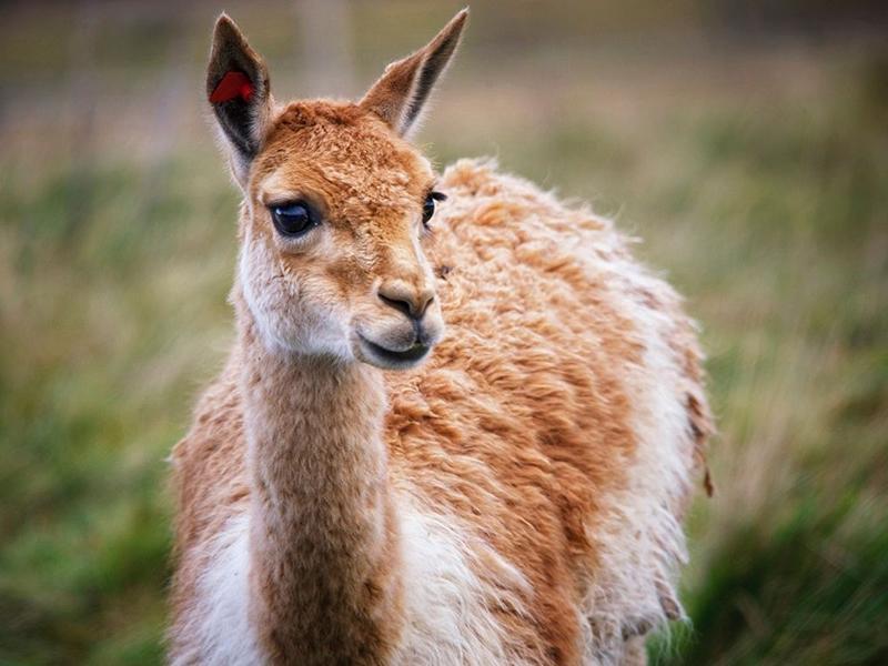 Future of Edinburgh Zoo and Highland Wildlife Park at risk
