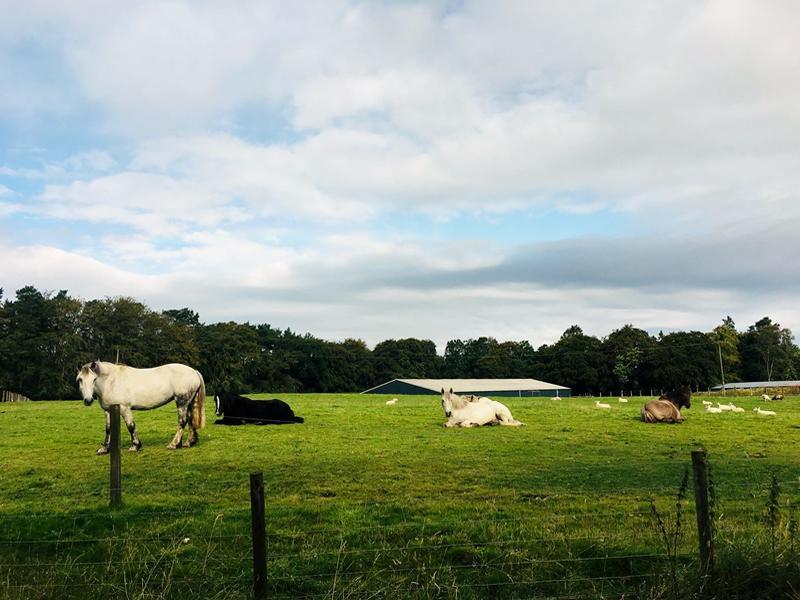 Turlood Equestrian Centre