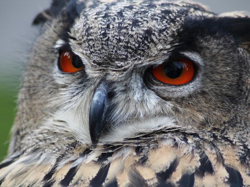 Big Bird Watch