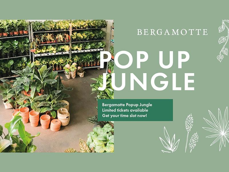 Bergamotte Pop Up Jungle