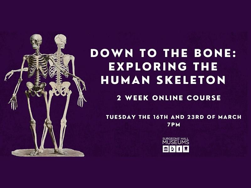 Down to the Bone: Exploring the Human Skeleton - 2 week course