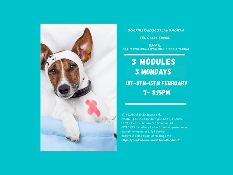 Dog First Aid (LIVE) 3 modules 3 Mondays Emergency Canine Care Course