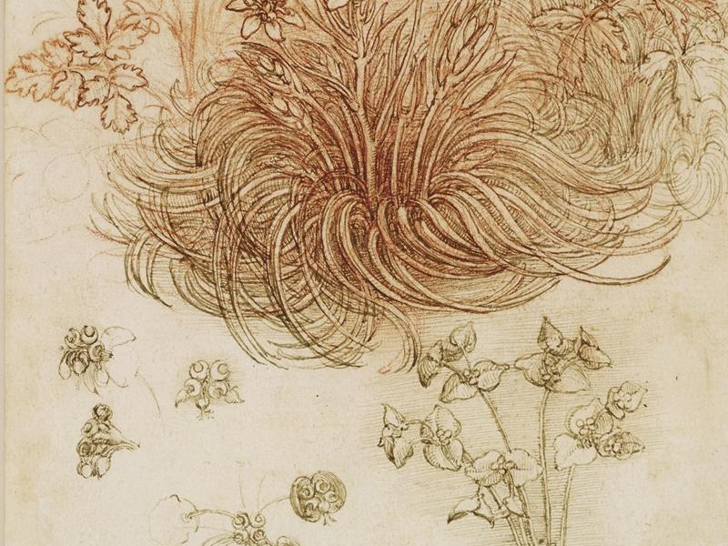 Drawings by Leonardo da Vinci go on display at Kelvingrove Art Gallery and Museum