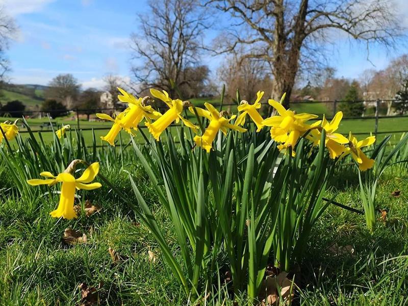 Get set for spring at Castlebank Horticultural Centre