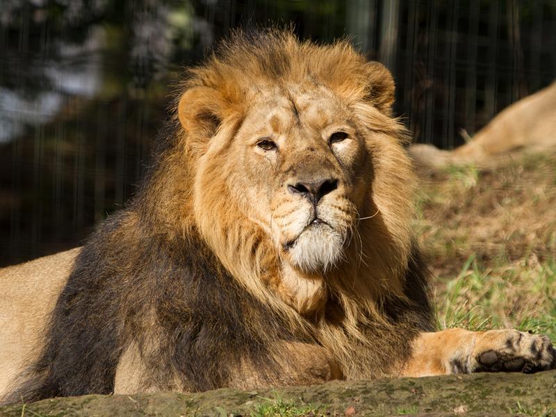 Edinburgh Zoo After Hours summer events return