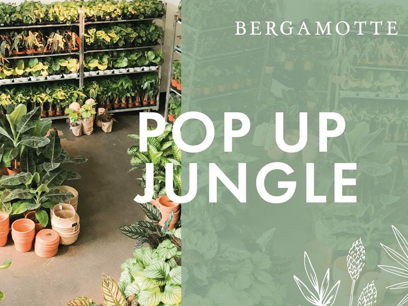 Bergamotte Pop-Up Jungle - CANCELLED