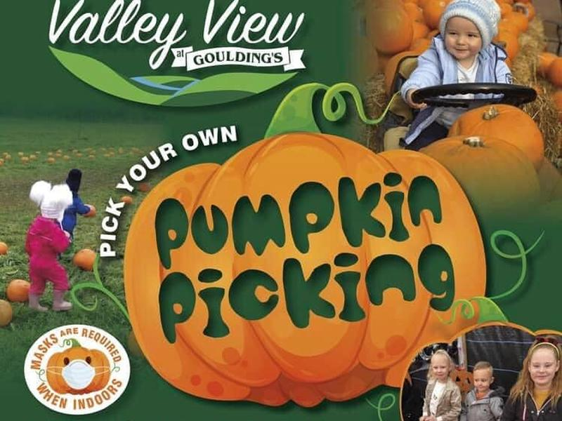 Pumpkin Picking at Valley View