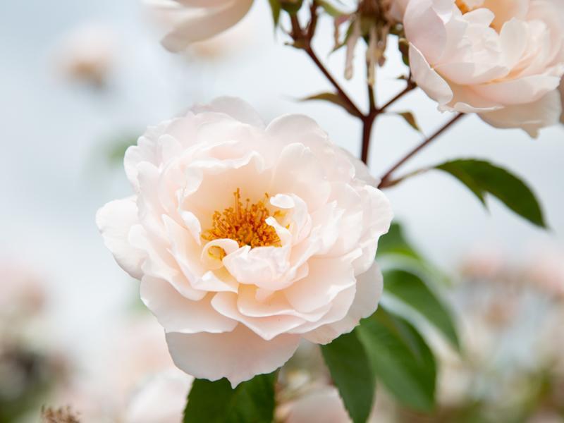 Plant to Perfume - Natural Perfume & Aromatherapy Workshop