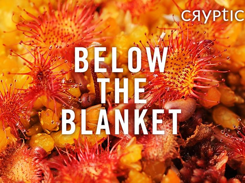 Cryptic: Below the Blanket